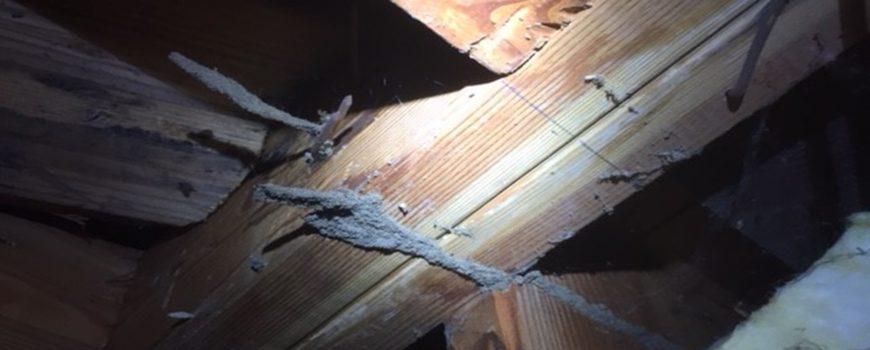 Burbank, Los Angeles Subterranean Termite Season