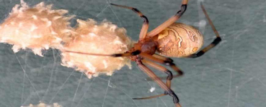 Spider Season in Los Angeles