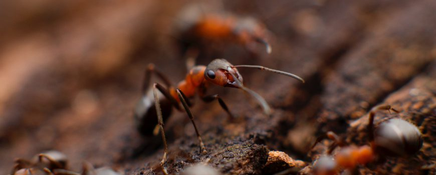 It's Ant Season – Burbank Ant Pest Control Treatments